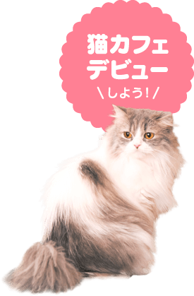 猫カフェの猫